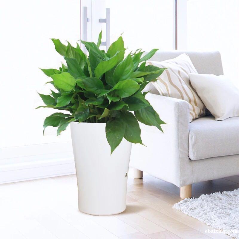 嘉定新城嘉定区江桥绿植花卉绿植植物租赁植物租摆养护