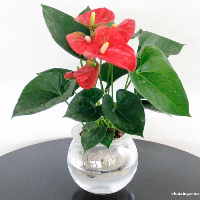 浦东区复兴东路金陵东路外滩绿植养护/花卉养护植物租赁租摆